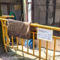 Photos: ikeda150328001