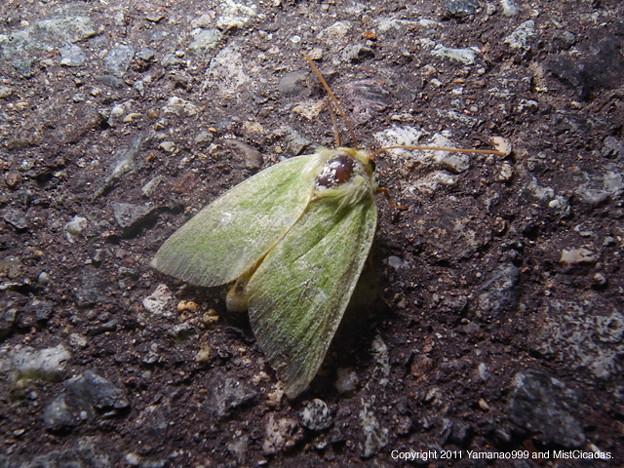 写真: yamanao999_insect2011_299
