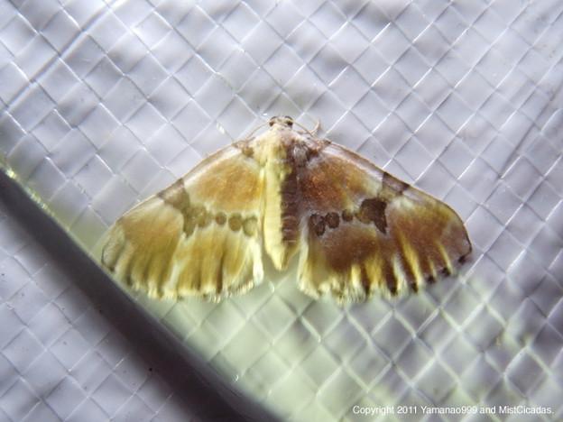 写真: yamanao999_insect2011_340