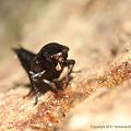写真: yamanao999_insect2011_458