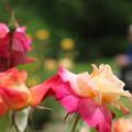 写真: 花を愛でる人