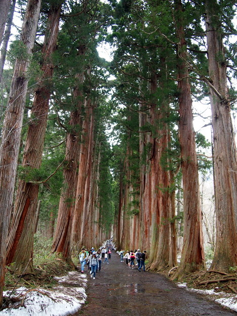 #9 杉並木