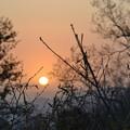 朝靄から素敵な~