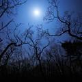 写真: 月と木星の接近の日に