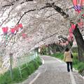 IMG_9143 H27桜