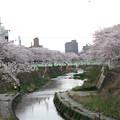 Photos: IMG_9165 H27桜