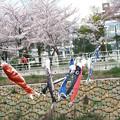 Photos: IMG_9170 H27桜