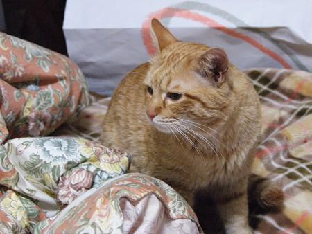 2009年03月05日の茶トラのボクチン(4歳)