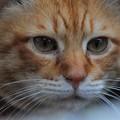 写真: 2010年03月07日の茶トラのボクチン(5歳)