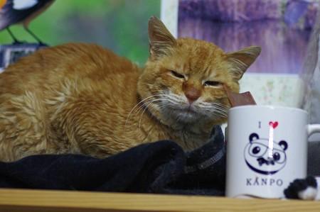 2012年03月10日の茶トラのボクチン(7歳)
