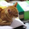 写真: 2010年03月20日の茶トラのボクチン(5歳)