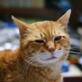 写真: 2010年04月16日の茶トラのボクチン(5歳半)