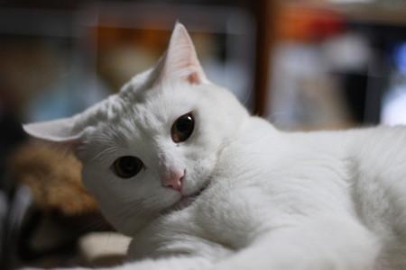 2015年5月3日のシロちゃん(2歳)