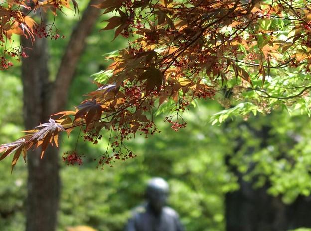 新緑の中の春紅葉