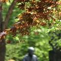 Photos: 新緑の中の春紅葉