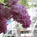Photos: 初夏の香り涼しげに