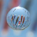 芥川鯉のぼり05