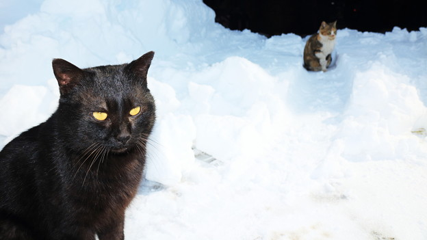 写真: 雪猫(4)