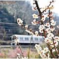 春爛漫の高尾界隈