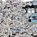 写真: 春色の駅