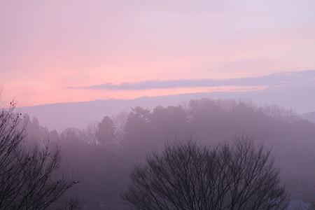 ピンクの朝
