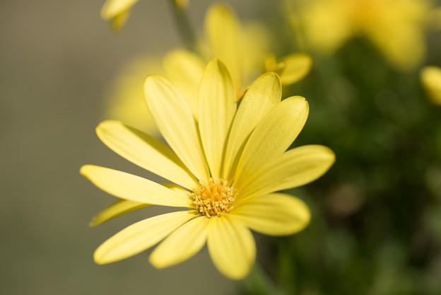 【庭の花(キララ)】2