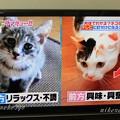 Photos: ニケ