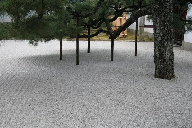 IMG_0307開山堂[京の冬の旅]・龍淵水の庭