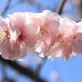 写真: IMG_8274隨心院門跡・小野梅園・梅