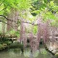 Photos: IMG_0119春日大社神苑萬葉植物園・新紅