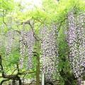 Photos: IMG_0137春日大社神苑萬葉植物園・春日砂ずり