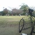 写真: いつもの公園で・・・