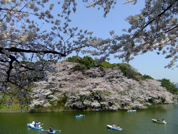 SakuraSakuraSakura15
