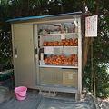 Photos: みかん無人販売所