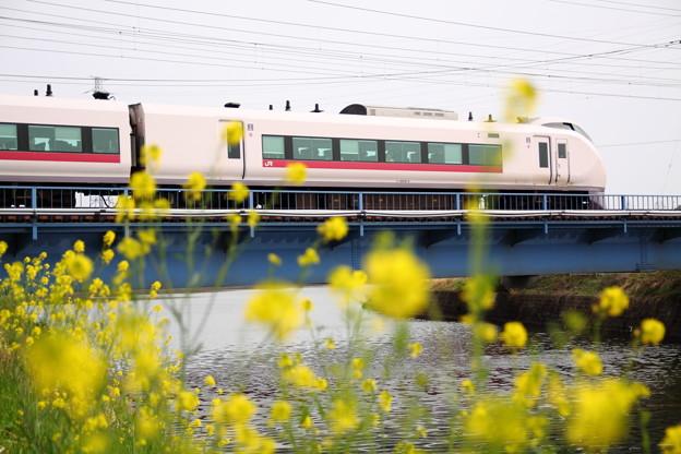 Photos: 菜の花とE657系