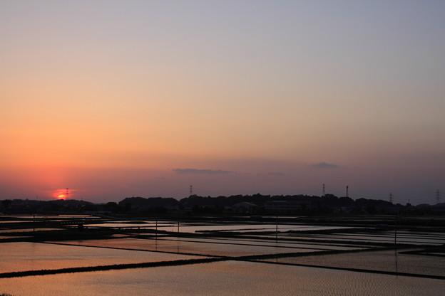 Photos: 水田夕景