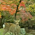 写真: 奈良公園にて・・・。
