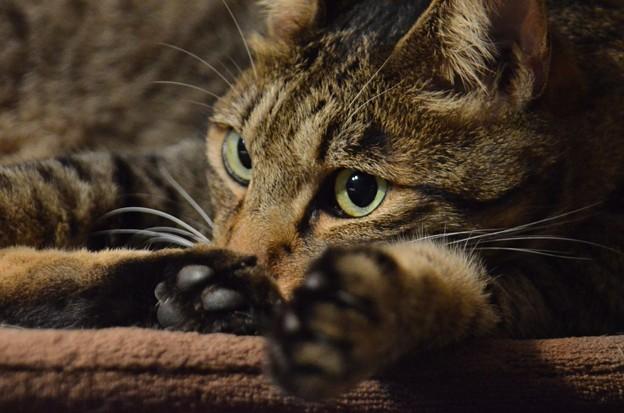 Photos: 他の猫が気になる、、。