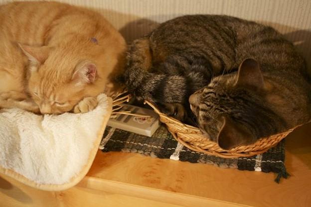 二匹の同居猫昼寝