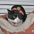 写真: 駅長の猫
