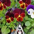 Photos: 庭の花 (2)