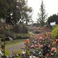 写真: 蜻蛉池公園