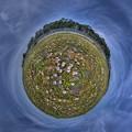 2015年5月6日 大浜海岸 ハマヒルガオ Little Planet(3) HDR
