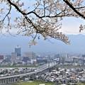 Photos: 名残の桜と