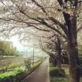 写真: 150405 鶴見川