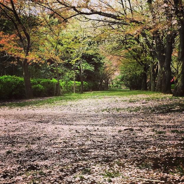150409 辰巳の森緑道公園