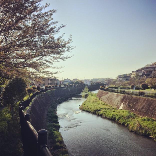 150416 鶴見川