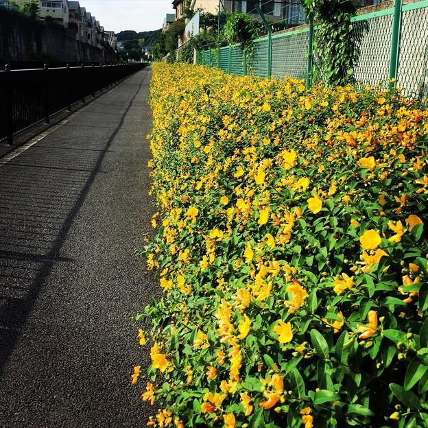 写真: 150531 真光寺川