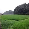 写真: 110729 真光寺川