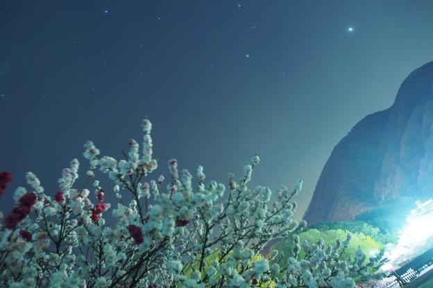 はるか彼方の銀河にも桃は咲いているのだろうか?